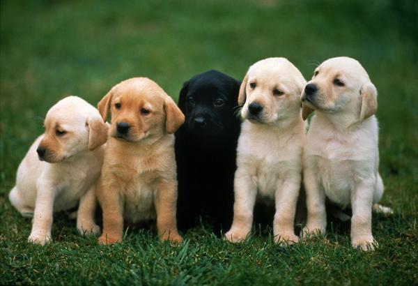 Что значит алиментный щенок
